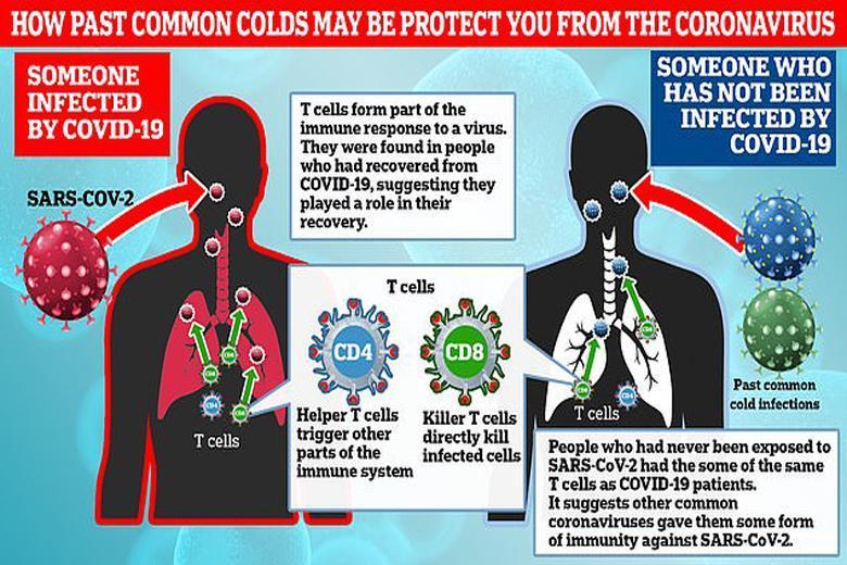 سرماخوردگی در برابر کرونا مصونیت ایجاد می نماید؟
